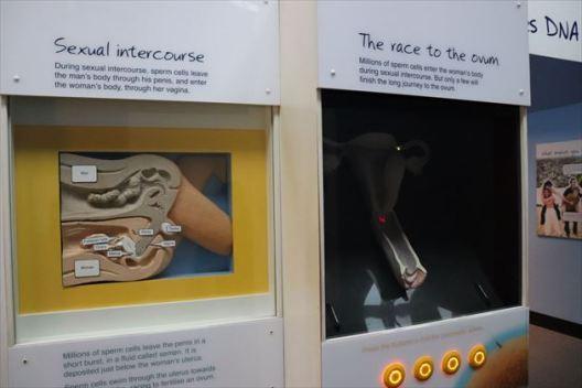 生殖に関する展示もあります