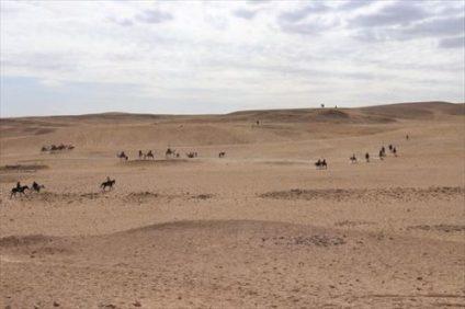 砂漠をあるくラクダや馬