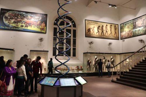 人類学に関する展示