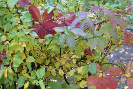 Осенний воздух