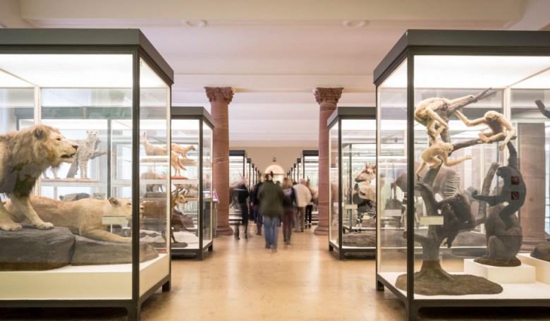 viele Besucher im Museum bei Säugetiere