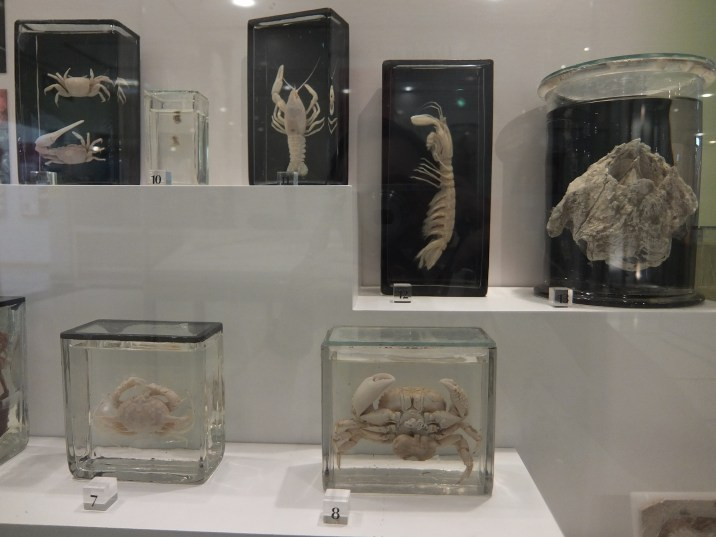 Cole Museum of Zoology 2