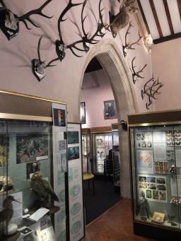 eton-natural-history-museum