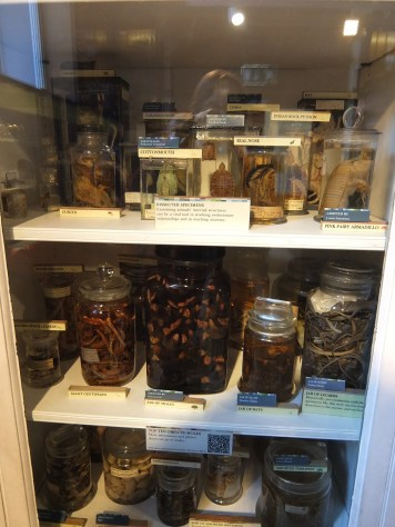 Grant Museum Jar of Moles case