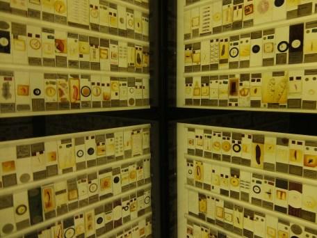 Grant Museum Micrarium