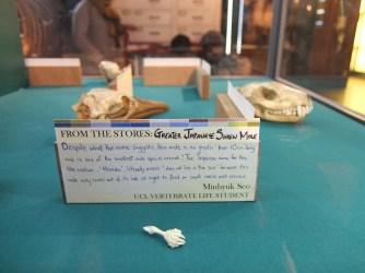 Grant Museum UCL student specimen 2