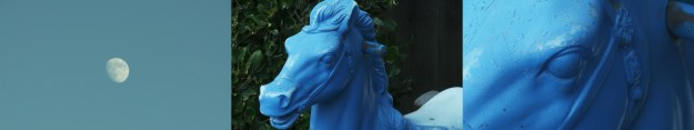 blue horse 3full res