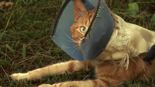 cat w hood one eye