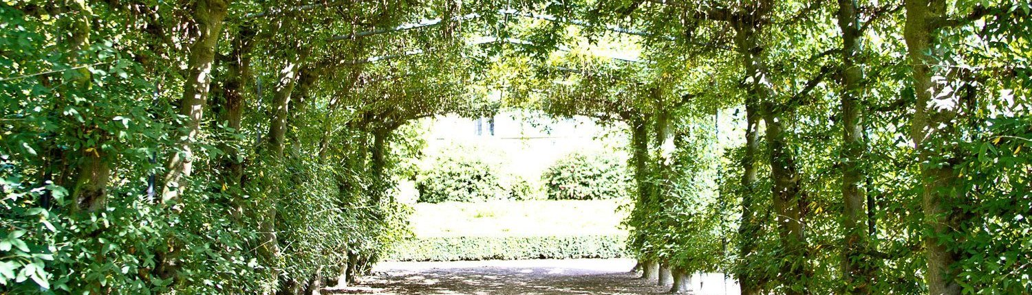 2 rows of plants opposite each other join together at the top to create an archway. The sun is shining.