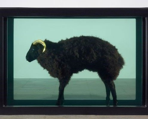 A black ram with golden horns is in a black box in the middle of a gallery.