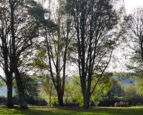A view of the trees and bank of the River Aire at Kirkstall Abbey