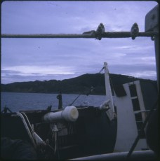 View from the deck of the TEV Wahine wreck overlooking the Pencarrow coast