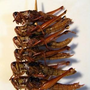 「イナゴ食べる」の画像検索結果