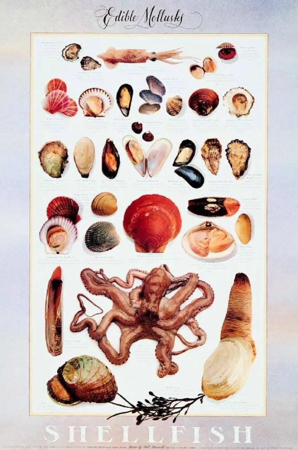 Edible Mollusk Poster