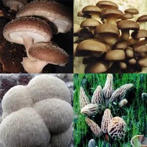Gourmet's Delight of Mushroom Growing Kits