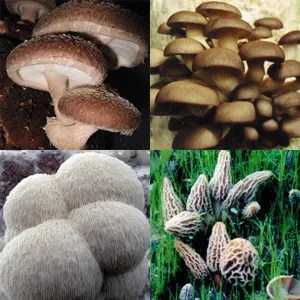 Gourmet-delight-mushroom-growing-kit (1)