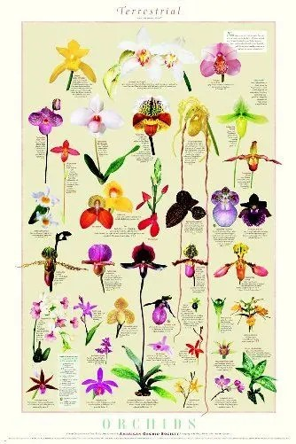 Terrestrial Orchids Poster