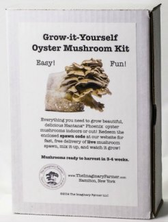 Grow kits medicinal mushrooms and natural remedies blog giy oyster mushroom kit solutioingenieria Images
