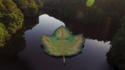 Palco flutuante no rio