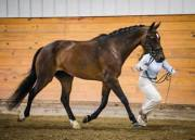 Jeri leading horse by reins