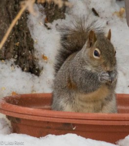 Squirrel 2-16-14 5582.jpg-5582