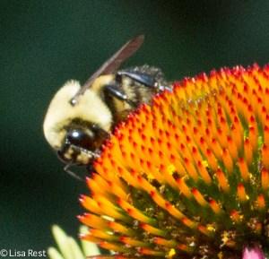 Bee Yard 7-19-14-2928
