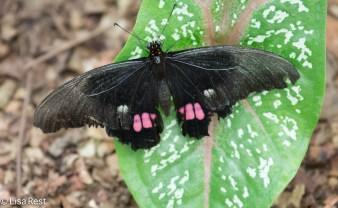 butterfly-07-08-2016-5000