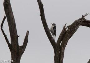 DOWP on tree stumps 04-03-2016-5069