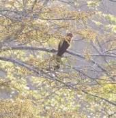 Squirrel Cuckoo 3-13-17-1027