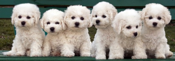 Puppies on Bench