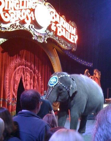 ringling brothers circus nashville tn family fun nashville parents