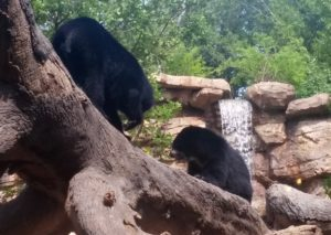 Andean Bears Nashville Zoo tips family fun
