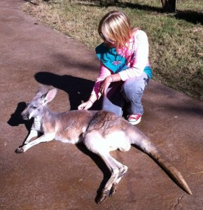 Nashville Zoo kangaroo petting area