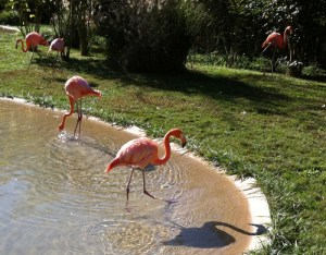 Nashville Zoo tips Pink Flamingo