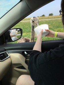 animal-lover-day-trip-tennessee