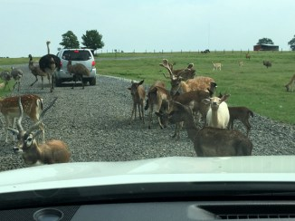 family-fun-animal-lover-vacation-tennessee