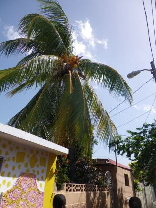Coconut Tree in the Ghetto