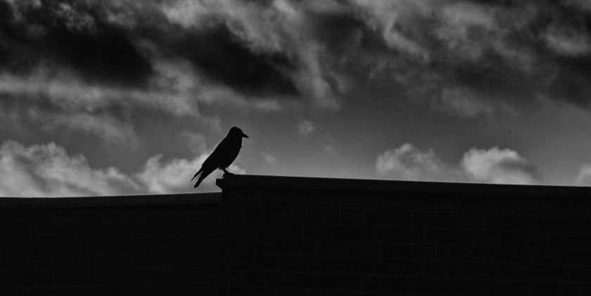 Auf dem Dach des Zitats. Foto: Hufner