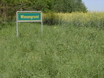 Wiesengrund. Foto: Hufner