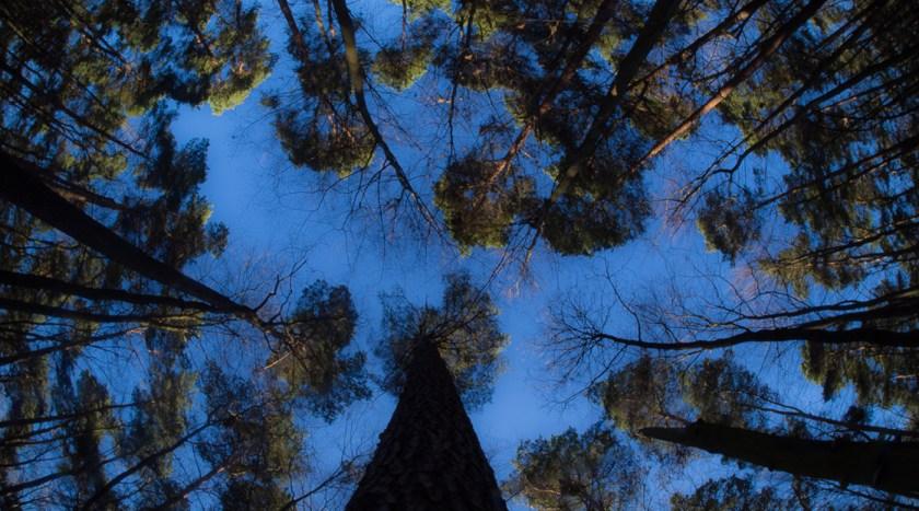 Wald, verdammt. Foto: Hufner