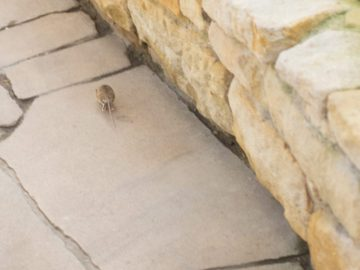 Dei Maus auf der Flucht. Foto: Hufner