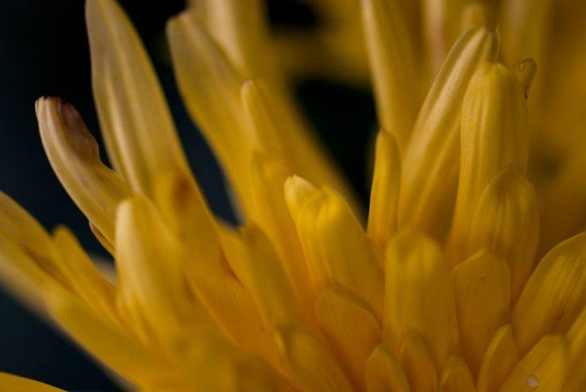 Blüten. Pflanzung von Avantgarde. Foto: Hufner