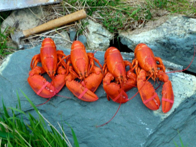 Line 'em up Lobsters - Only cost $20 for all this.