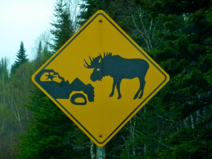Moose Pwnage - Gros Morne in a Nutshell.