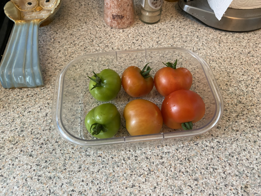 Six tomatoes from the garden