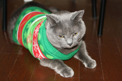 cat in sweater by alll