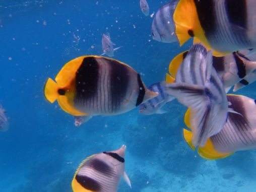 BBFish