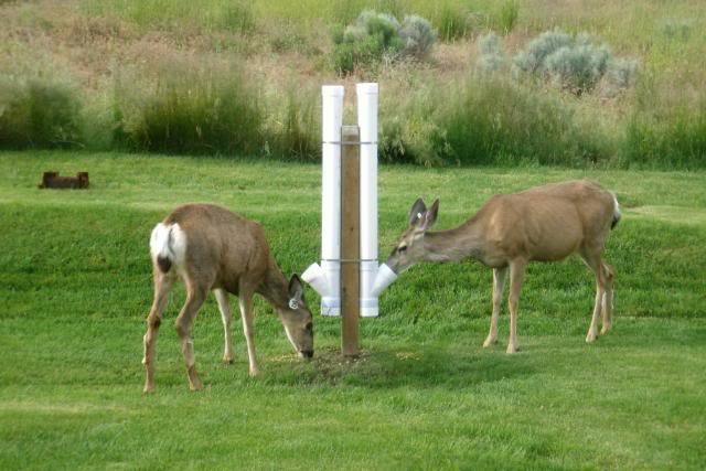 Pvc Deer Feeder