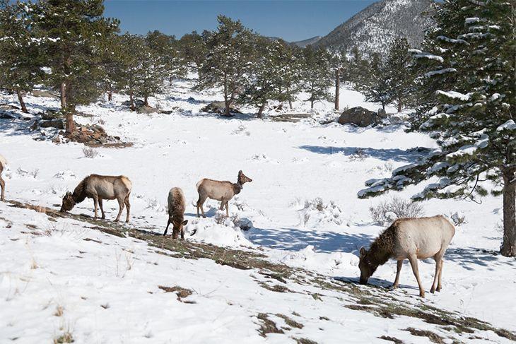 deers look for food
