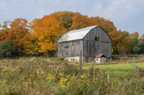 Muskoka Barn in Autumn